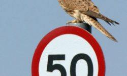 The Great British Road Sign – 50 years and counting