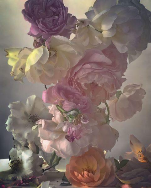 NK_Roses_